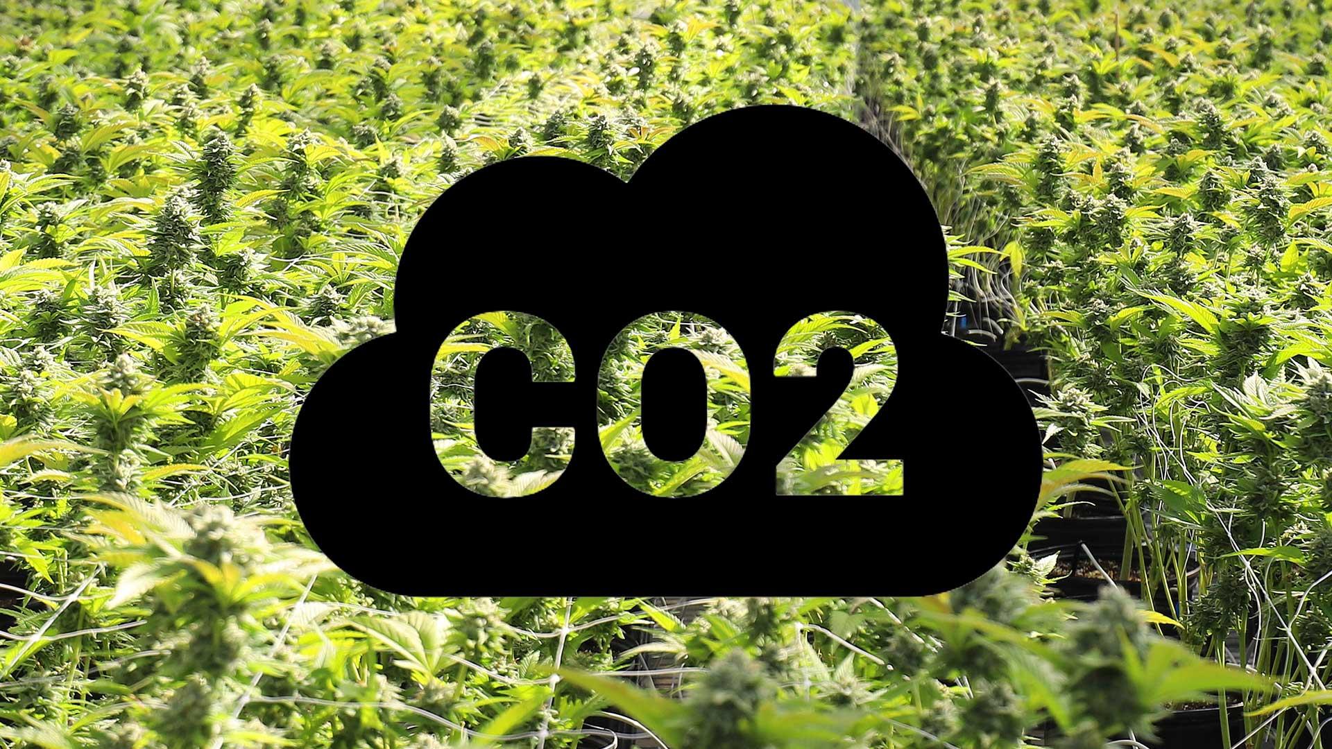 ANIDRIDE CARBONICA CO2 PER COLTIVAZIONE INDOOR